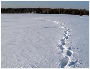 Зима, поле,след